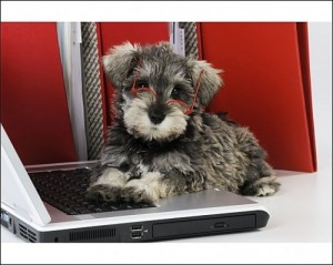 Pup on computer